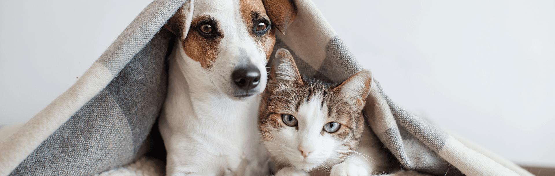 Home Pet Home, Schesir