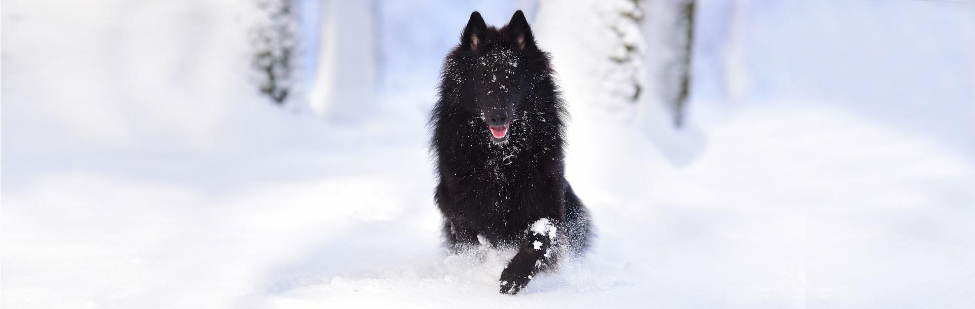 Come capire se il tuo cane ha freddo, Schesir