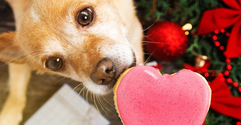 L'inverno cambia l'alimentazione del cane?, Schesir