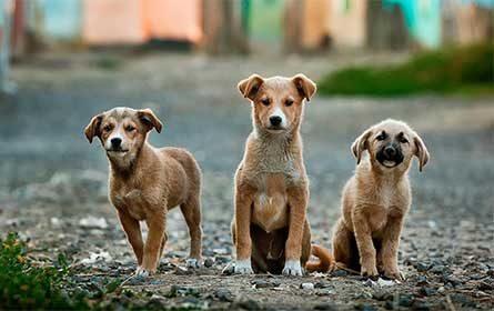 Divertirsi in casa con cani e gatti, Schesir