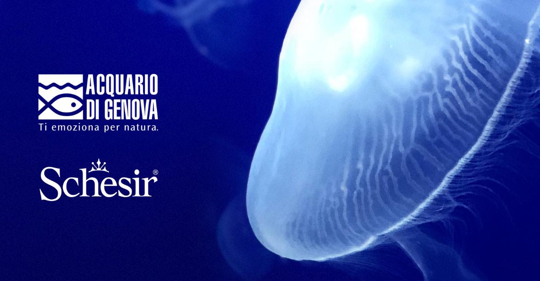 Schesir e Acquario di Genova, insieme per la sostenibilità marina., Schesir