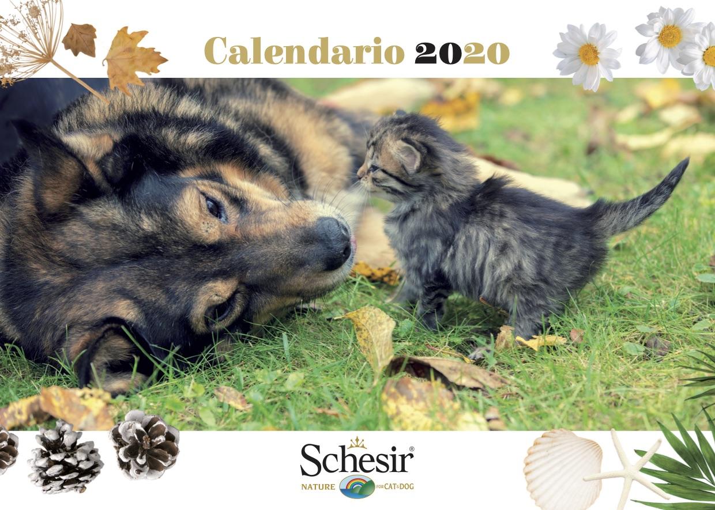 É arrivato il calendario Schesir 2020, Schesir