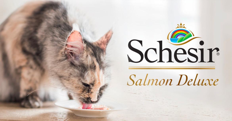 Salmon Deluxe, Schesir