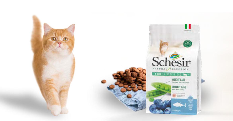 Per ogni gatto il suo Natural Selection, Schesir
