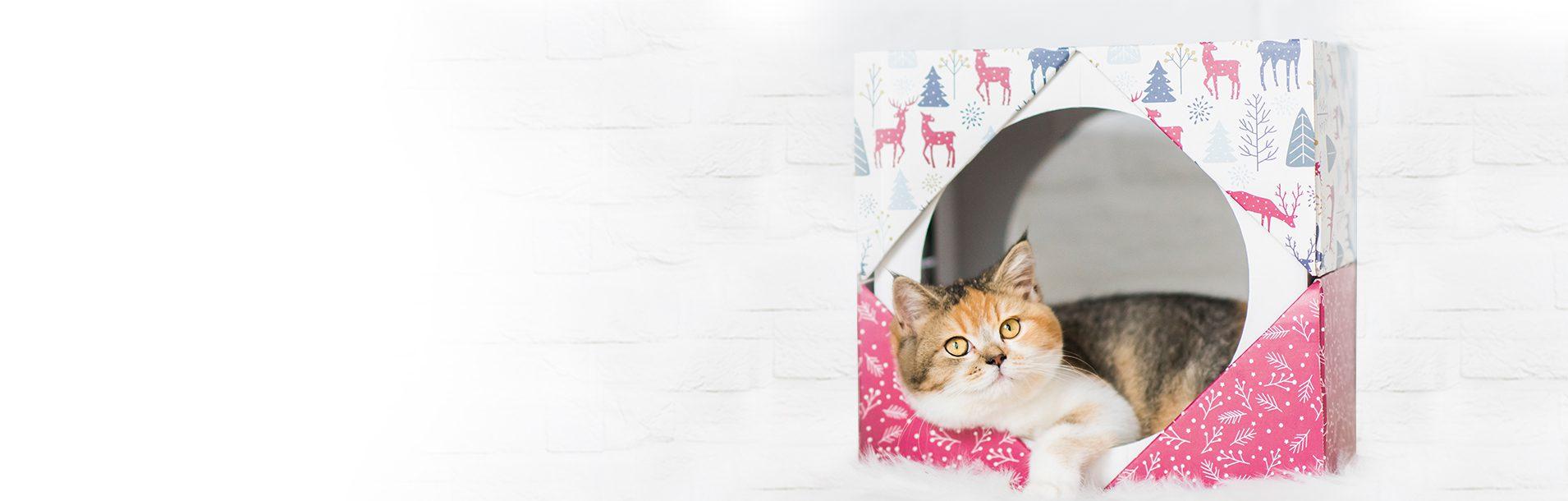 Il gatto in inverno: come aiutarlo ad affrontare al meglio le basse temperature., Schesir
