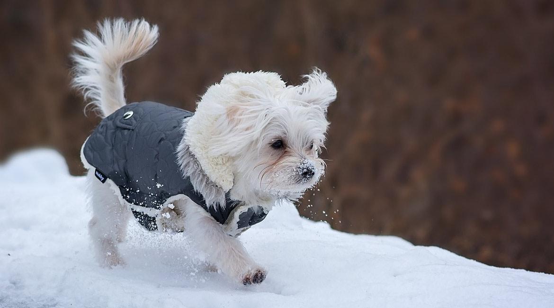 Cane in inverno: i consigli per proteggerlo dal freddo, Schesir