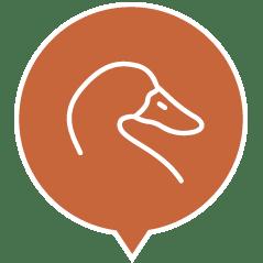 , Cibo umido per cani con ingredienti naturali – Tacchino con anatra, aringa, mela ed erbe lattina 95 g, Schesir - Alimenti Naturali Per Cani E Gatti