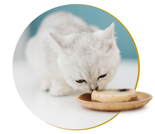 Mixed Feeding, Schesir - Natural Food For Dogs And Cats