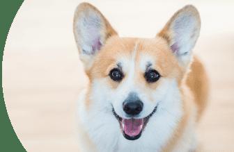 La nostra etica: trasparente e cruelty-free, Schesir - Alimenti Naturali Per Cani E Gatti
