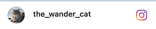 cat-insta