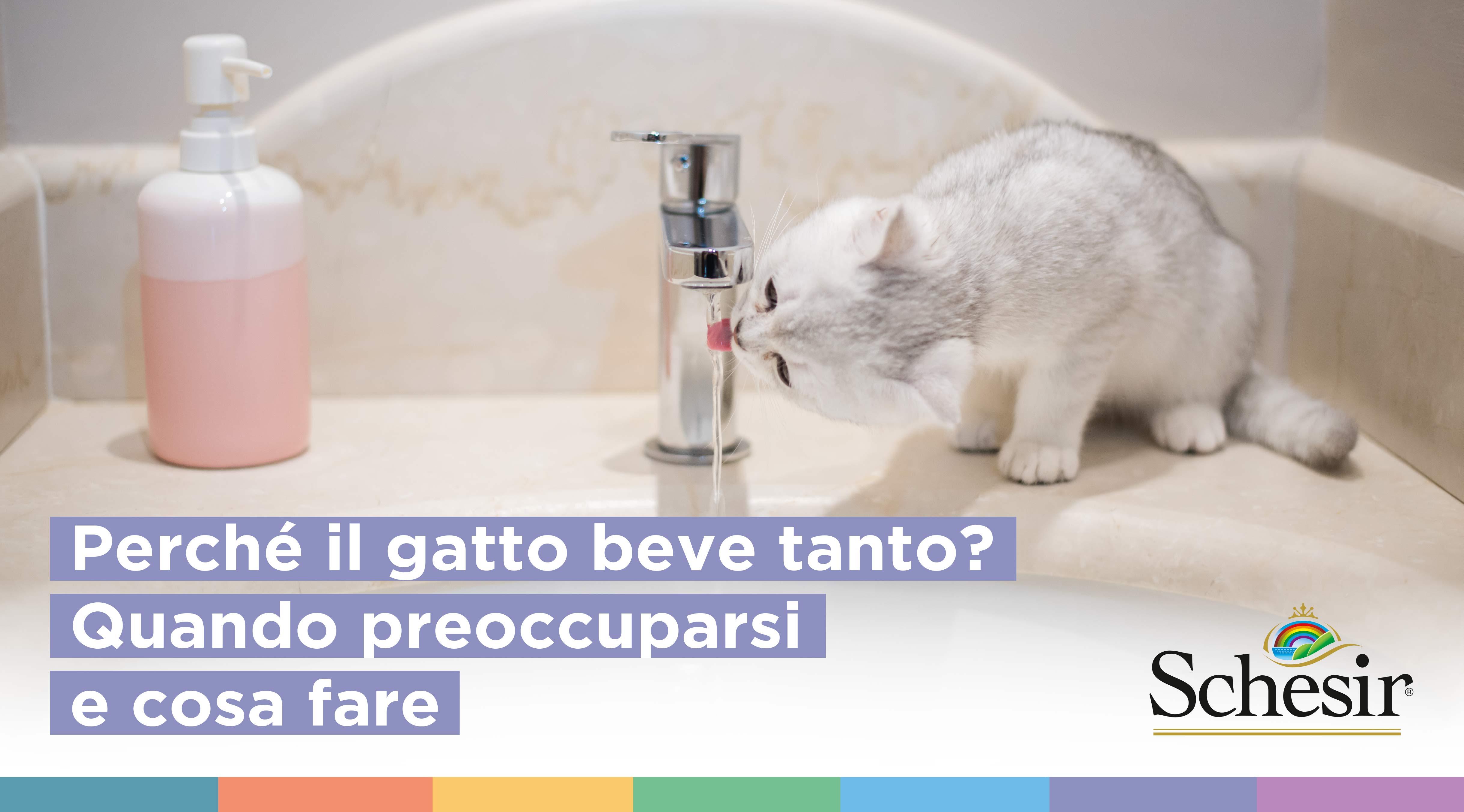 Perché il gatto beve tanto? Quando preoccuparsi e cosa fare, Schesir