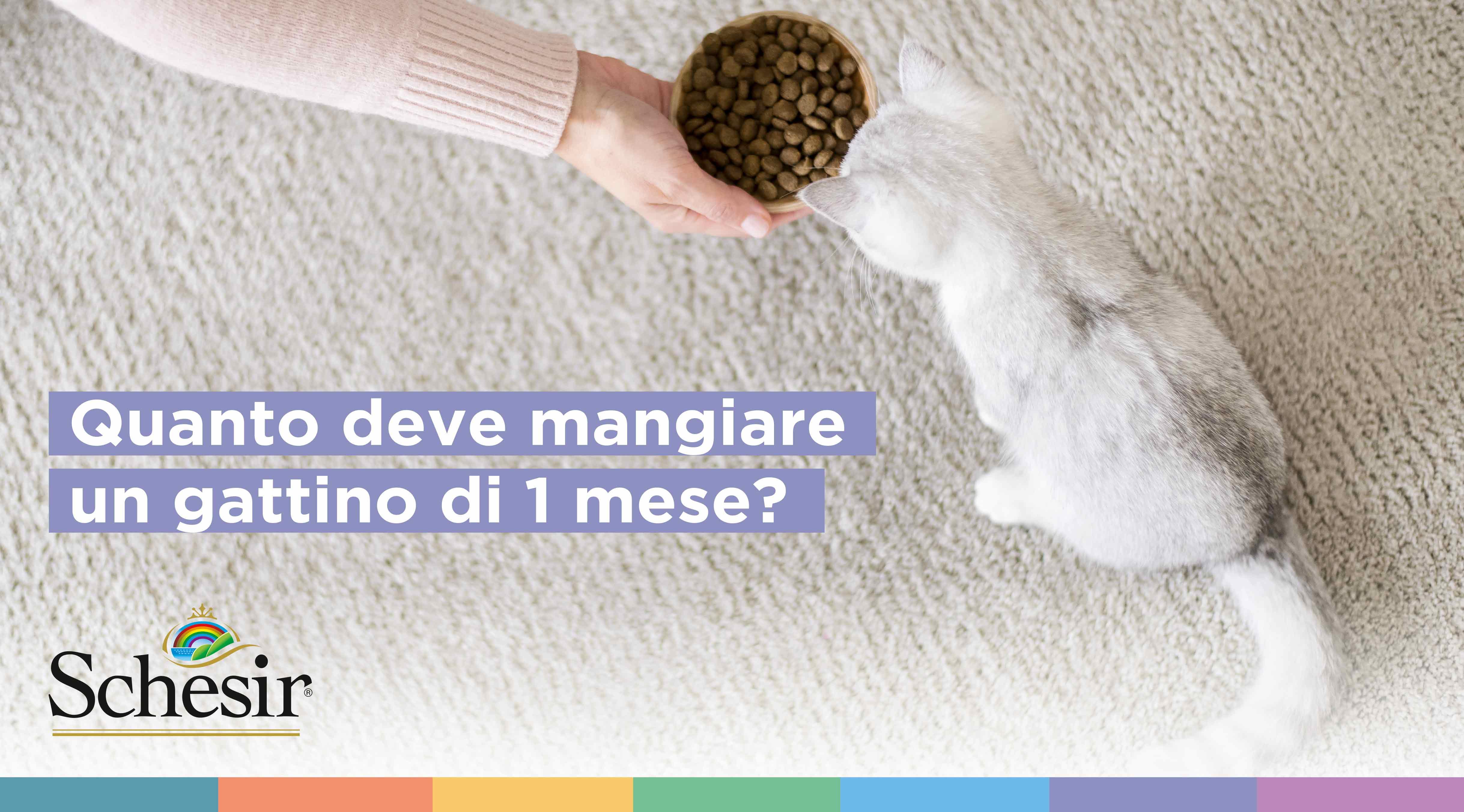 Quanto deve mangiare un gattino di 1 mese?, Schesir