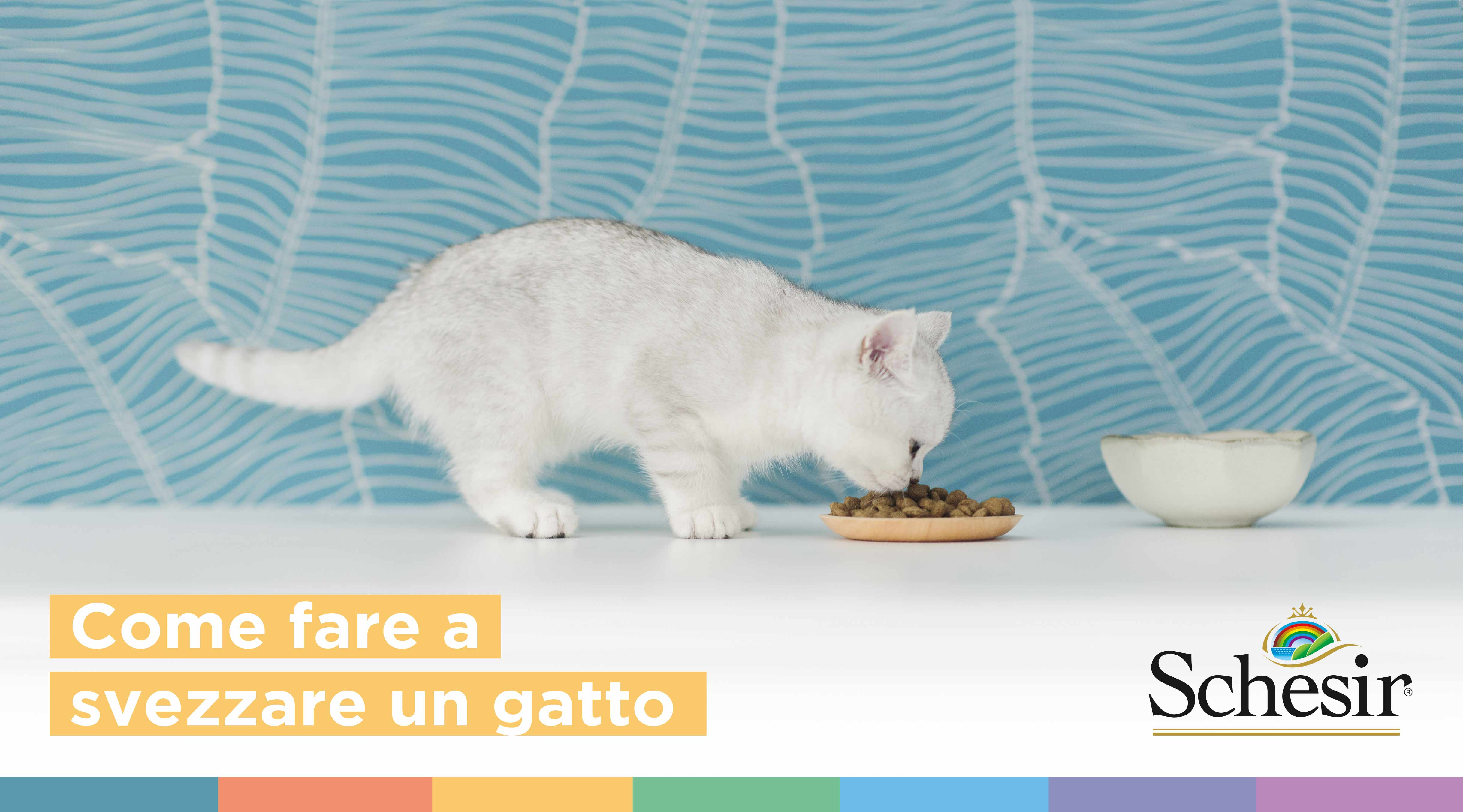 Come fare a svezzare un gatto: i nostri consigli, Schesir
