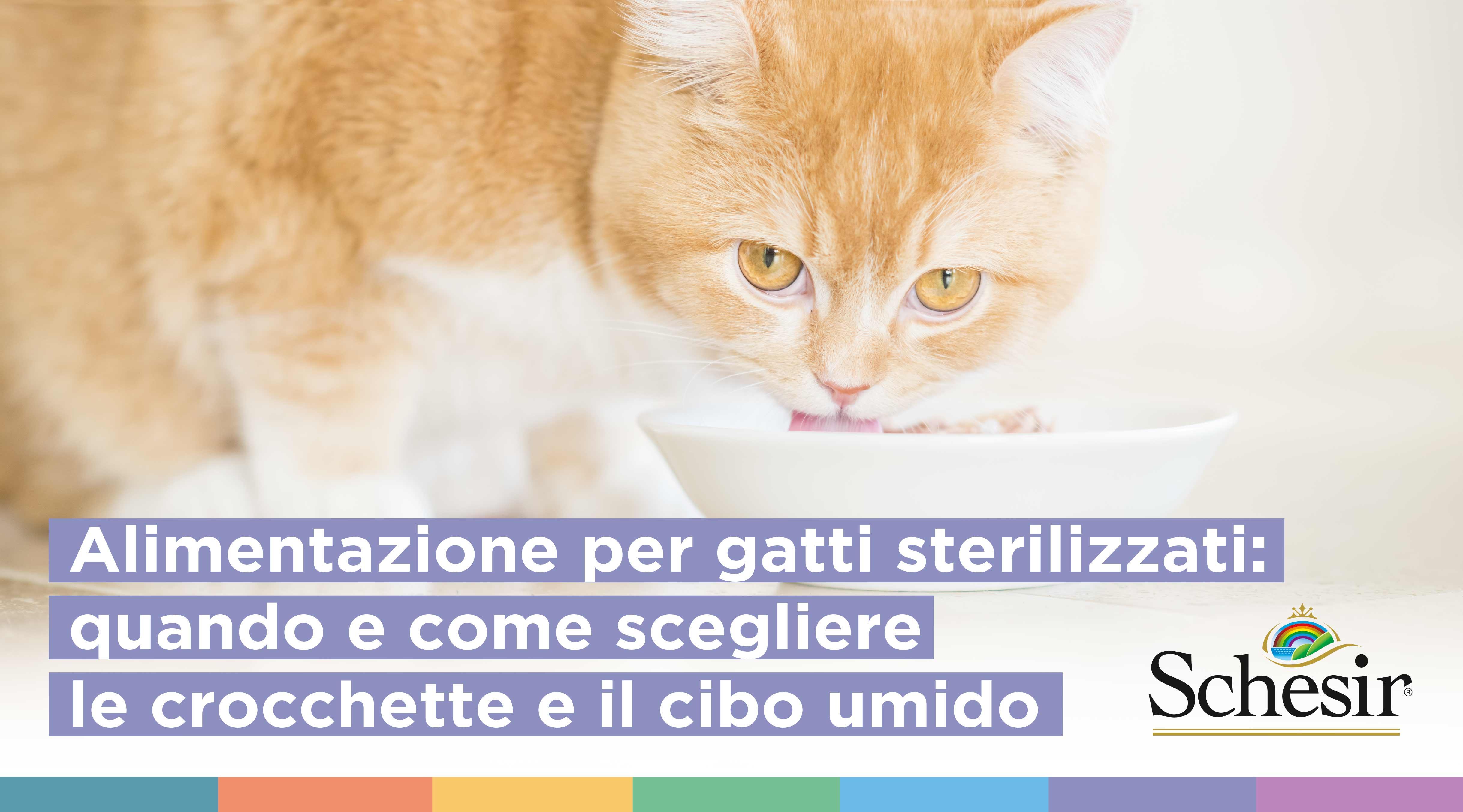 Alimentazione per gatti sterilizzati: quando e come scegliere le crocchette e il cibo umido, Schesir
