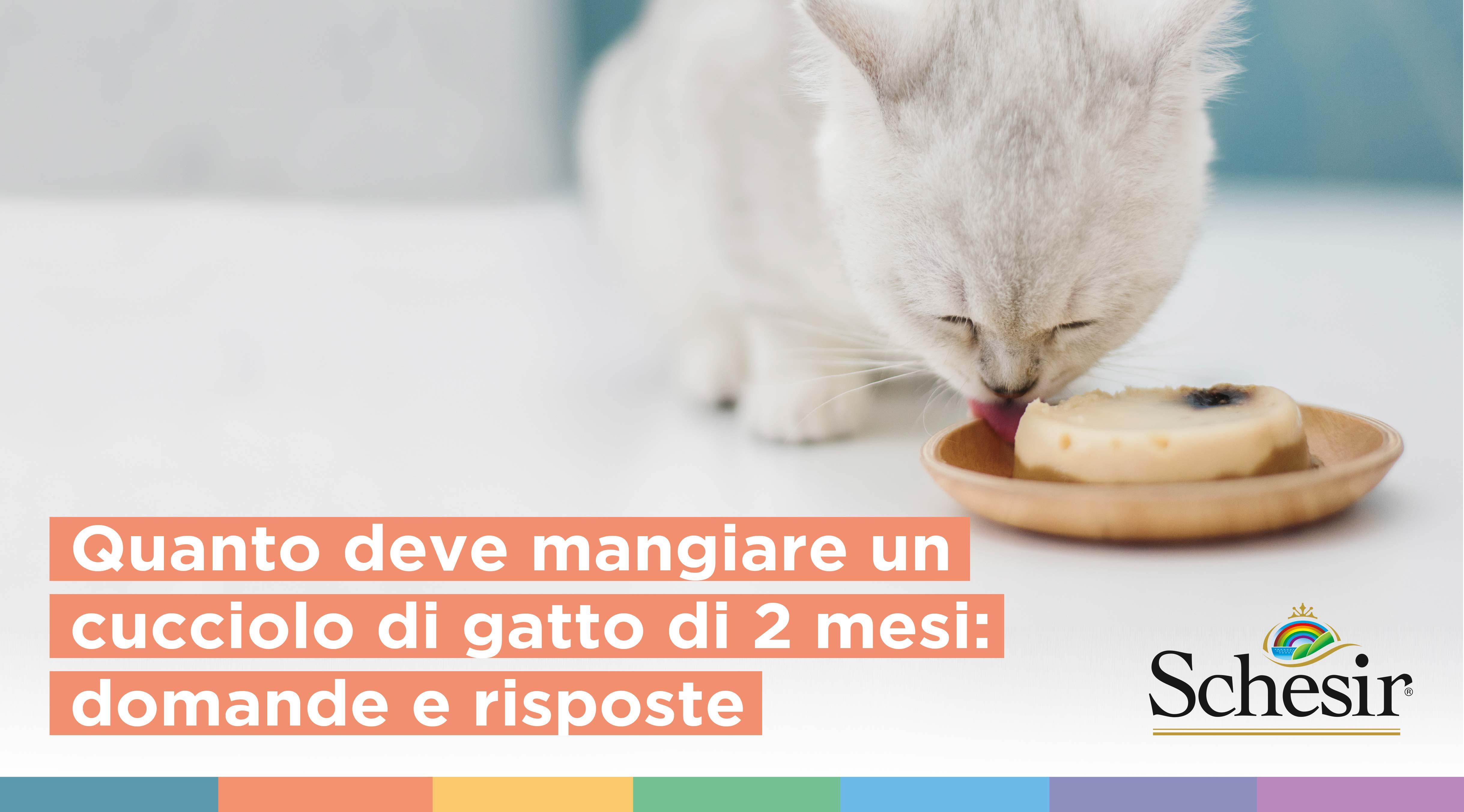 Quanto deve mangiare un cucciolo di gatto di 2 mesi: domande e risposte, Schesir