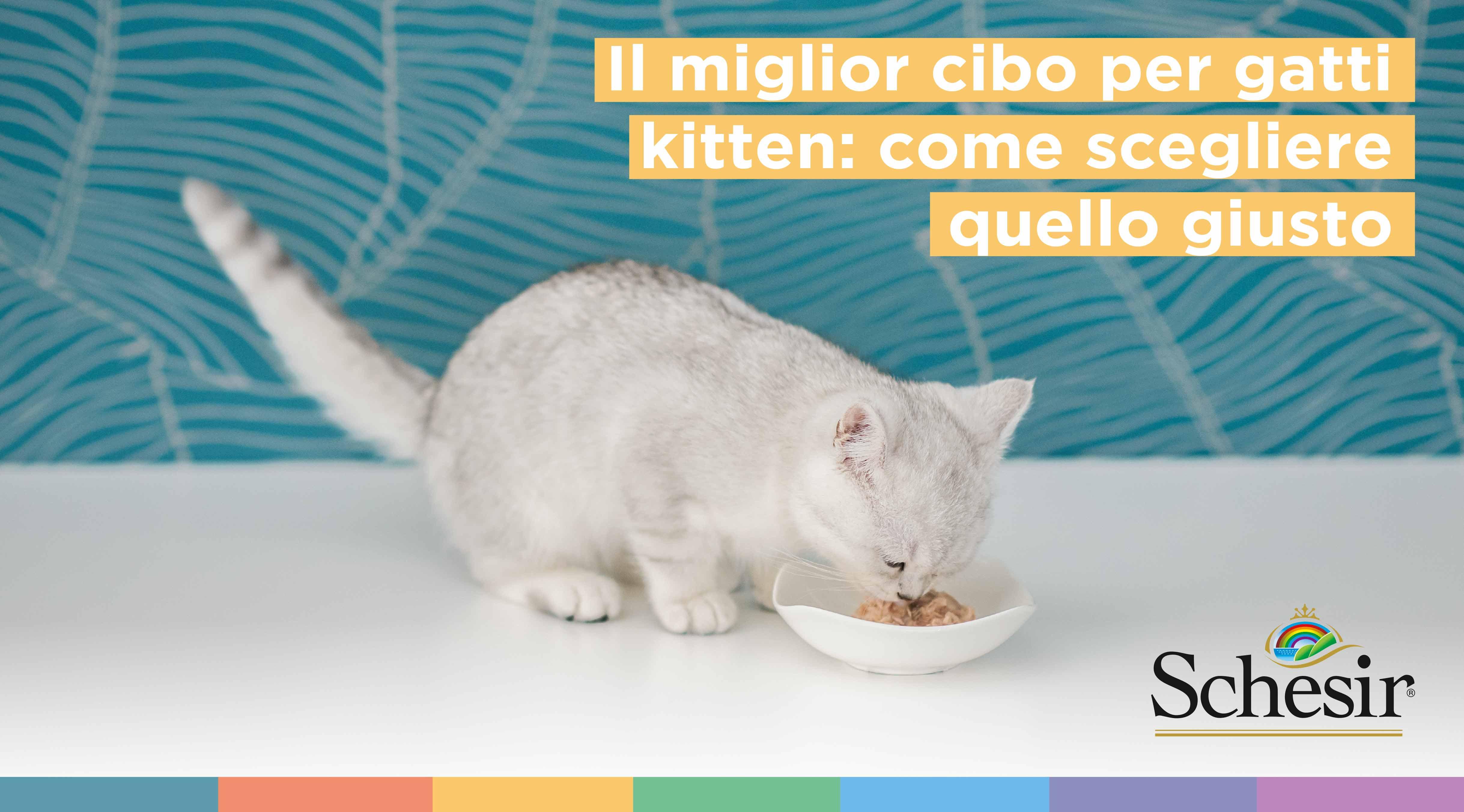 Il miglior cibo per gatti kitten: come scegliere quello giusto, Schesir