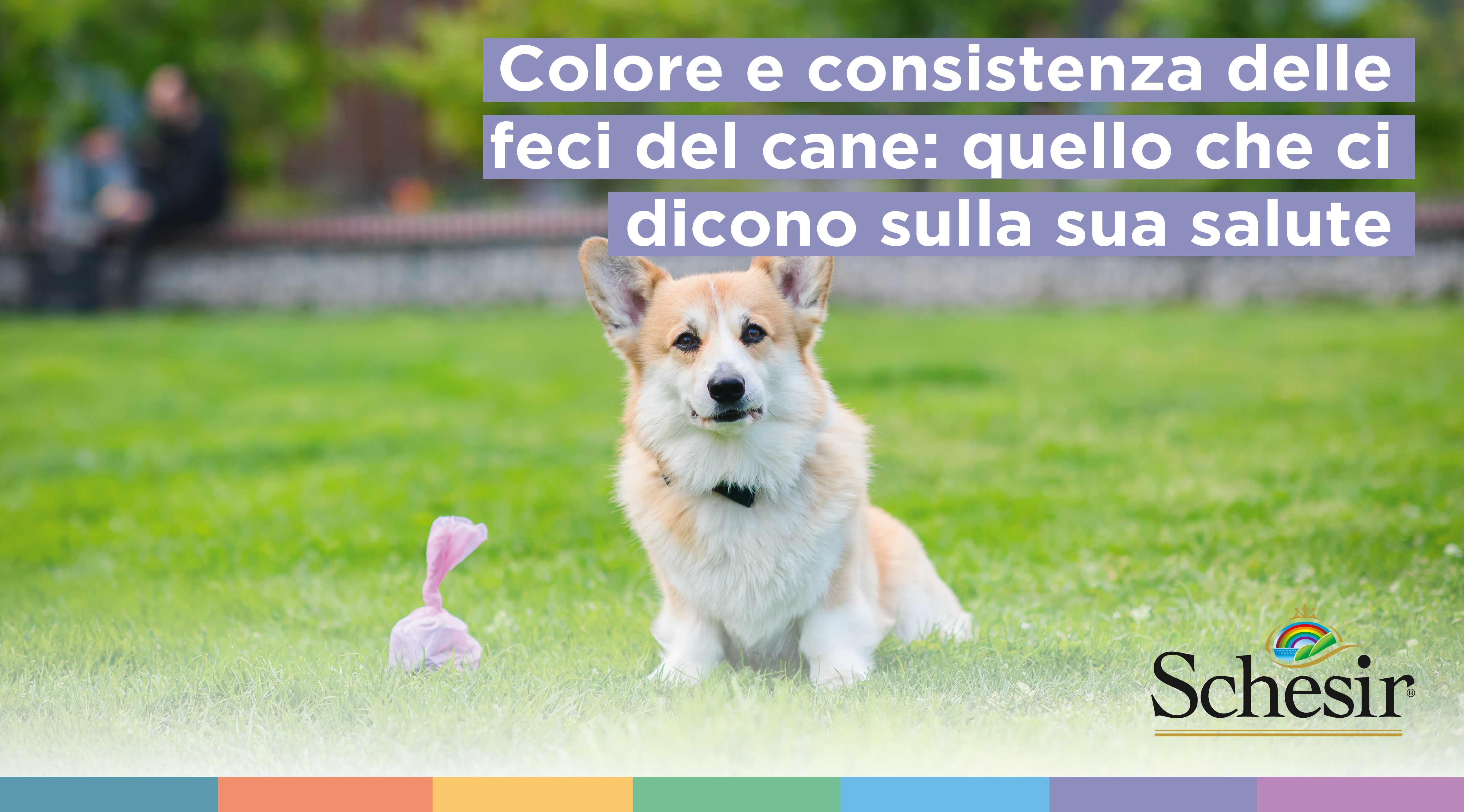 Colore e consistenza delle feci del cane: quello che ci dicono sulla sua salute, Schesir