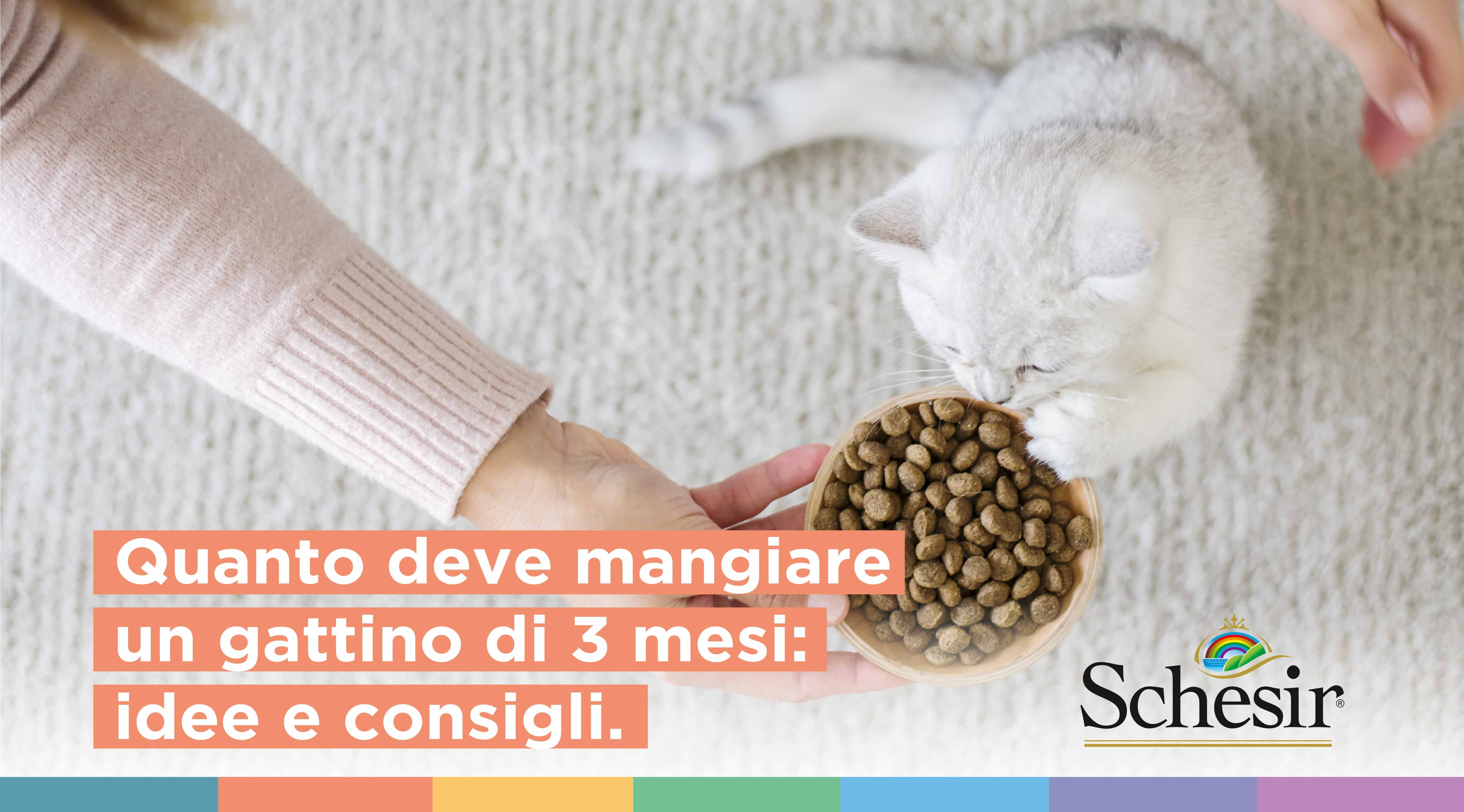 Quanto deve mangiare un gattino di 3 mesi: idee e consigli, Schesir