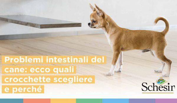 grafica per articolo sulle crocchette cane problemi intestinali