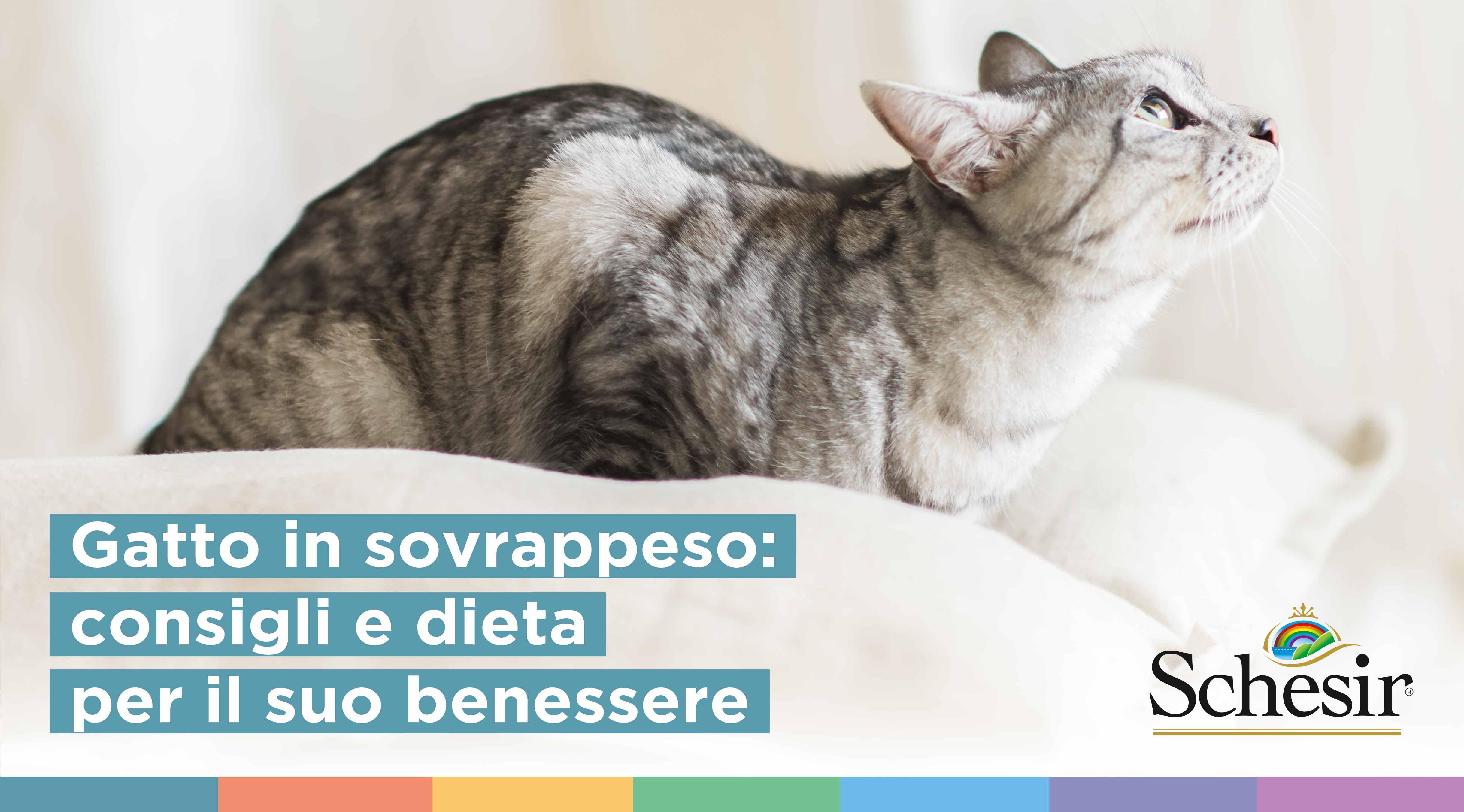 Gatto in sovrappeso: consigli e dieta per il suo benessere, Schesir - Alimenti Naturali Per Cani E Gatti